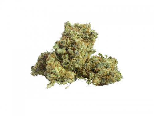 cannabis erba terapeutica therapy